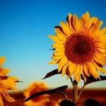 ¿Qué es la psicología positiva?<br>Introducción y visión de conjunto.